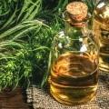 Olej konopny z nasion konopi siewnych